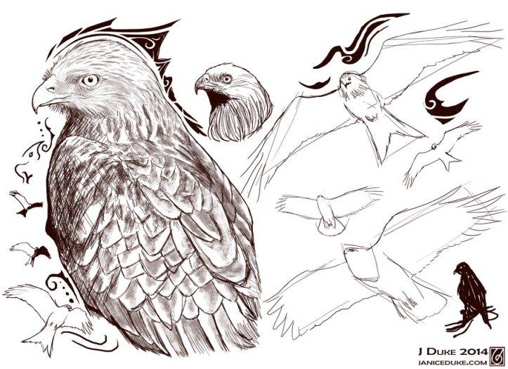 red_kite_sketches_by_janiceduke-d7tyel8