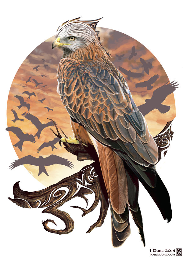 Red Kite © Janice Duke. Limited edition print (20) that raised over £1000 for the RSPB.